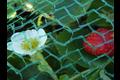Hwtc plena tuinnet 5x10m,  , maas 10x10 mm, groen
