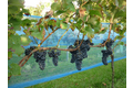 Hwtc vinea wespennet 1,2x20m,  , blauw
